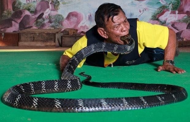 Lang ran ho mang o Thai doi mat voi cuoc chien de sinh ton hinh anh 1