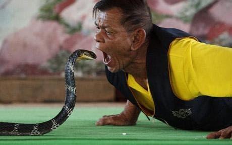 Lang ran ho mang o Thai doi mat voi cuoc chien de sinh ton hinh anh