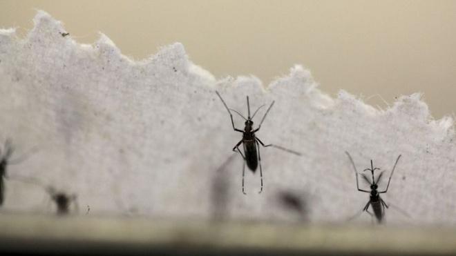 Sap thu nghiem dieu tri virus Zika tren nguoi hinh anh 1