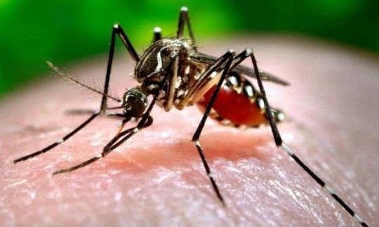 Cu hon moi, dung so lay nhiem virus Zika hinh anh 1