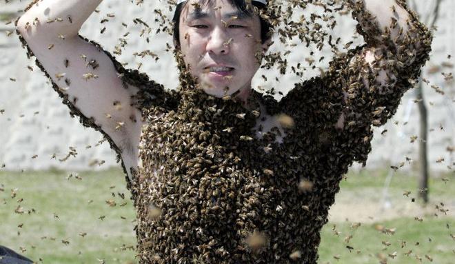 Dieu gi xay ra voi co the khi bi 1.000 con ong dot cung luc? hinh anh