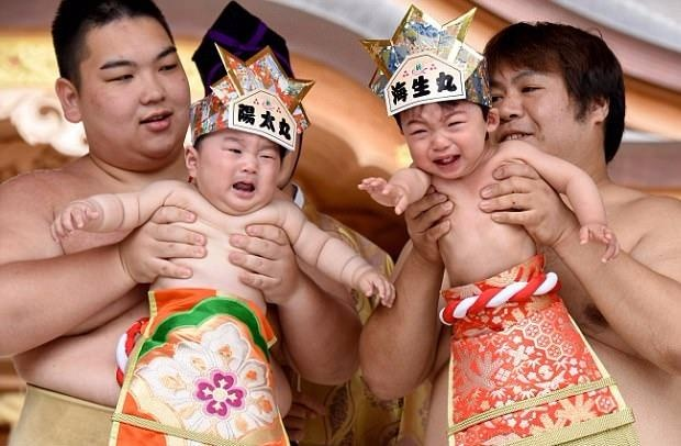 Cuoc thi vo si sumo 'du' tre khoc tai Nhat hinh anh