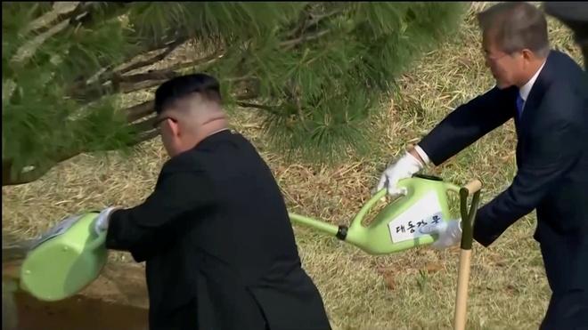 Ong Kim Jong Un va Moon Jae In 'trong' cay thong 65 tuoi hinh anh
