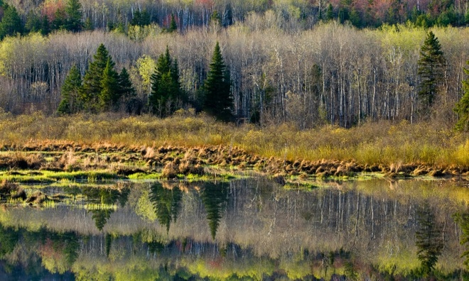 Tiếng kêu bí ẩn trong rừng Canada gây hoang mang