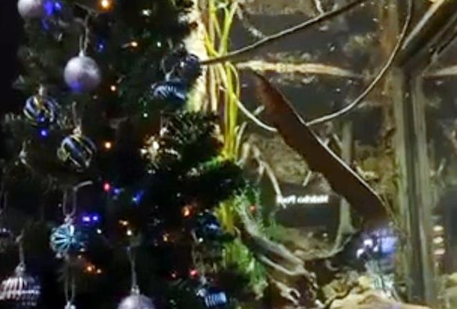 Luon phong dien cuc manh khi phan khich, thap sang cay thong Noel hinh anh