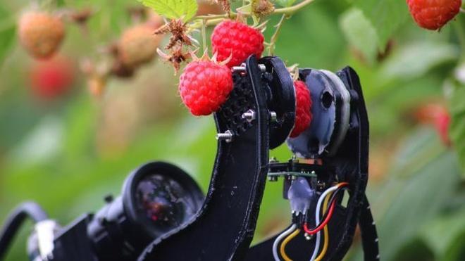 'Vit' robot giup nong dan Nhat diet co khong can hoa chat hinh anh 3