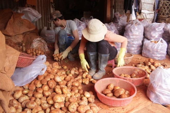Lap chot 24/24 chan khoai tay Trung Quoc vao cho nong san hinh anh 2