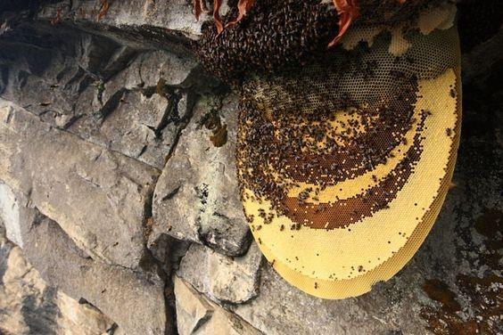 San mat ong tren vach nui dung dung cua day Himalaya hinh anh 2