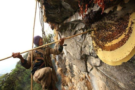 San mat ong tren vach nui dung dung cua day Himalaya hinh anh