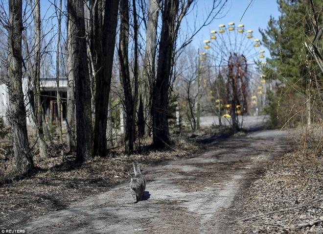 Dong vat thong tri vung dat hoang Chernobyl hinh anh 4