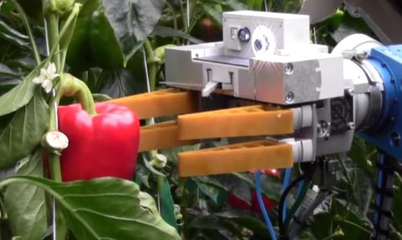 Vien canh robot 'cuop' viec cua con nguoi hinh anh