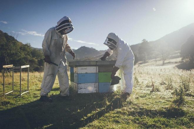 Australia va New Zealand tranh chap ve mat ong Manuka hinh anh 1