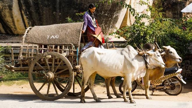 Mat troi o dat Phat Myanmar hinh anh 9