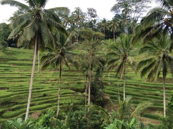 Nhung diem an choi, tham quan tuyet dep o Bali hinh anh 4