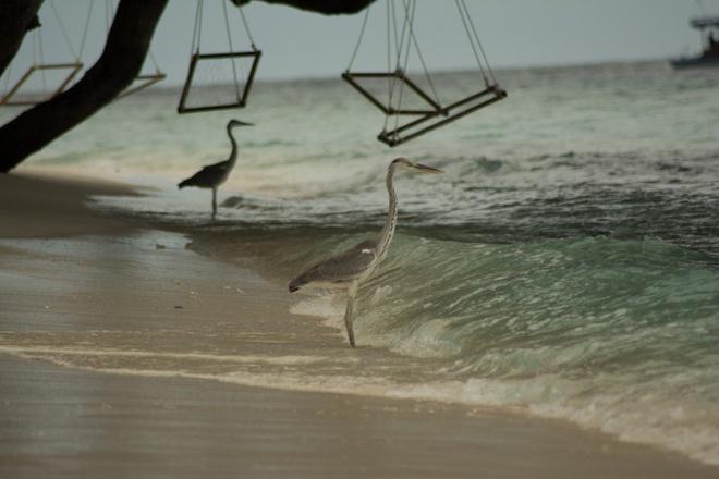 Kham pha Maldives khi khong rung rinh tien bac hinh anh 3