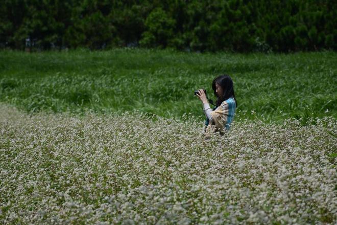 Canh dong hoa tam giac mach no ro o Lam Dong hinh anh 9