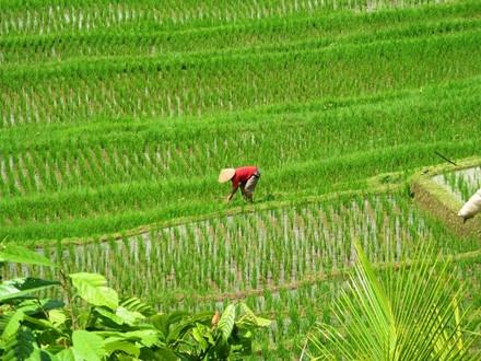 Kham pha Pemuteran tuyet dep it ai biet o dao Bali hinh anh 6