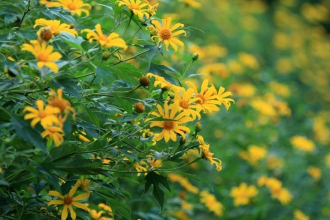 Len nui Ba Vi thuong hoa da quy hinh anh 7
