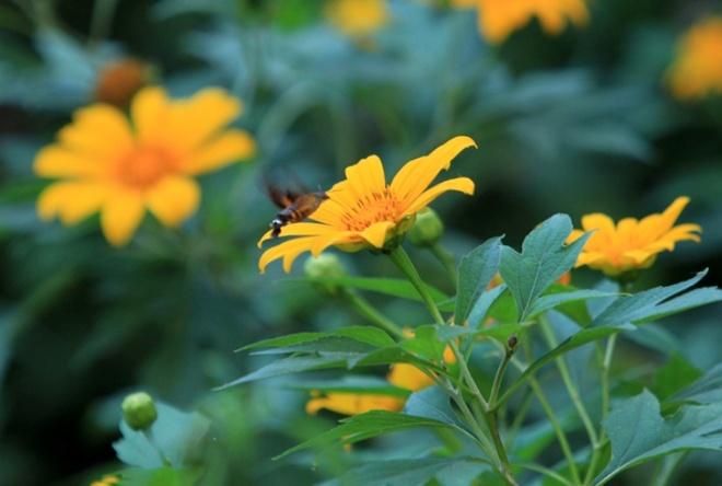 Len nui Ba Vi thuong hoa da quy hinh anh 8