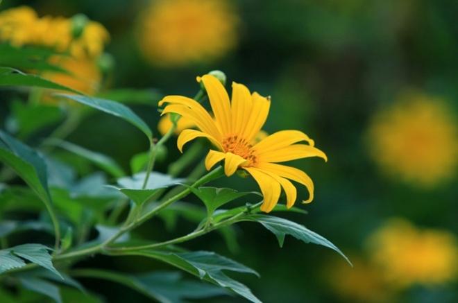 Len nui Ba Vi thuong hoa da quy hinh anh 10