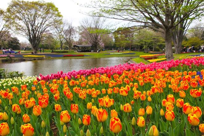 Thien duong hoa o cong vien mang ten Nhat hoang Hirohito hinh anh