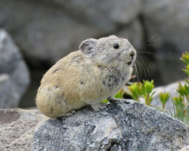Loài động vật đáng yêu nhất hành tinh thường trộm thức ăn
