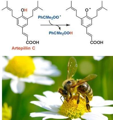 Tac dung cua keo ong Meldosol trong ho tro dieu tri ung thu hinh anh 3