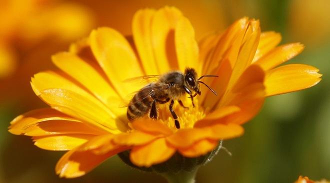 Nhung cong dung huu ich cua keo ong hinh anh 1