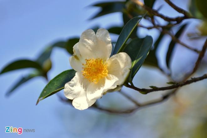 Nguoi dan Binh Lieu tro tai nu cong gia chanh tai hoi hoa so hinh anh 4