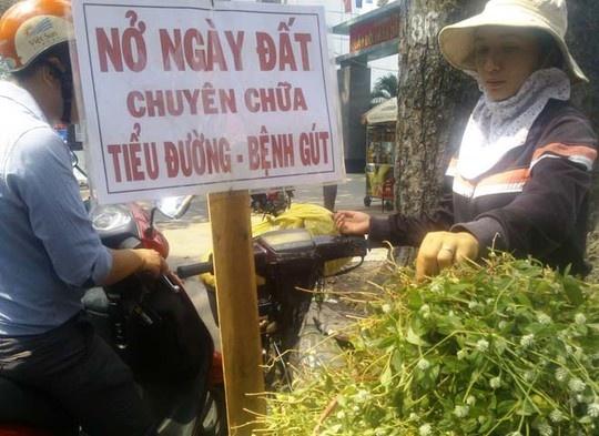 Cây nở ngày đất, một loại thảo được đang bán khắp thành phố.
