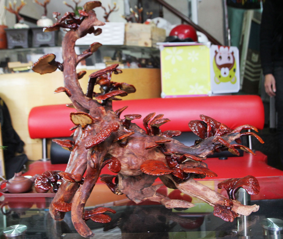 12 trieu dong/chau bonsai linh chi dang rong choi Tet hinh anh