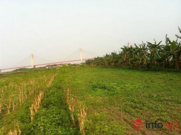 Chuyen la dich vu cho thue dat trong rau sach o Ha Noi hinh anh 1 Khu đất được anh Tùng thầu lại để cho thuê trồng rau sạch.