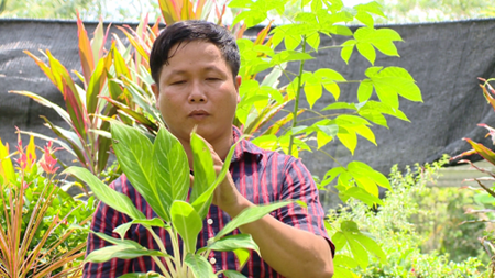 """Chang trai kiem 5 ty dong moi nam tu la cay hinh anh 2 Từ cơ sở của chàng trai xứ dừa này, lá cây nghệ thuật """"made in Thanh lá"""" được chuyển đi khắp mọi vùng miền trên cả nước."""