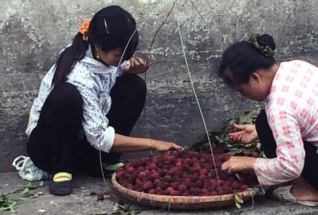 Thanh mai Trung Quoc mua 8.000 ban 200.000 dong/kg hinh anh 3