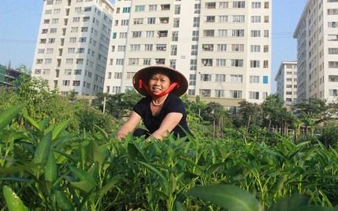 Nguoi Ha Noi dua nhau lam 'nong dan' trong rau sach hinh anh 3 Cô Minh rất vui với mảnh vườn mình