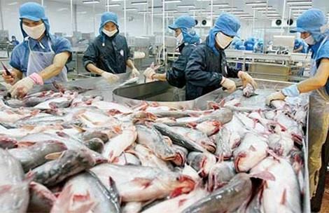 Mat 60 trieu USD vi khong hieu luat My hinh anh 1 Cá tra Việt từng bị kiện bán phá giá ở Mỹ. Do vậy, DN Việt sẽ có lợi nếu chịu khó tìm hiểu luật pháp Mỹ.