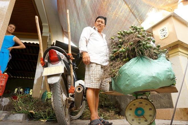 Thua Thien Hue: Thuong lai do xo san cau non xuat sang TQ hinh anh 3 Mỗi ngày cơ sở của ông Sinh thu mua ước chừng 1,5 tấn cau và chỉ mua cau non. Theo ông Sinh, mùa cau cao điểm vào tháng 8 âm lịch. Năm ngoái, giá cau chỉ bằng 1/3 so với năm nay.