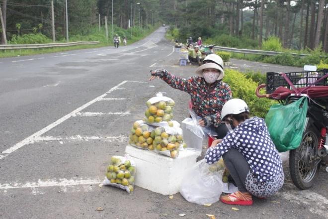 1 kg hong dac san Da Lat gia 2.000 dong hinh anh 1 Người dân huyện Đức Trọng mang hồng giòn bày bán dọc đèo Prenn Đà Lạt với giá 10.000 đồng/kg sáng 30-9.