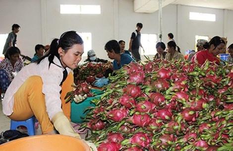Trái cây Việt chủ yếu dừng lại ở sơ chế giá trị thấp, thiếu sản phẩm chế biến có giá trị gia tăng.