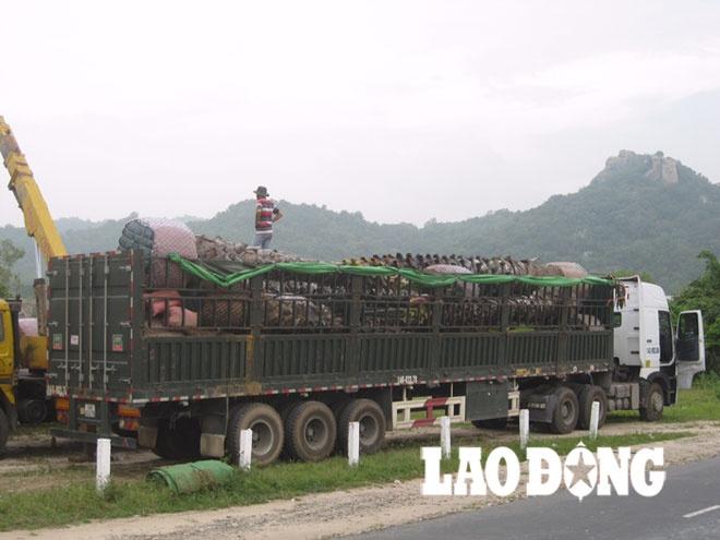 Canh bao thuong nhan Trung Quoc mua cay thot not cao tuoi hinh anh 1 Một xe tải siêu trường, siêu trọng chở thốt nốt chuẩn bị xuất phát ra phía Bắc.