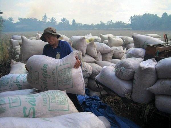 Viet Nam trung thau ban 1 trieu tan gao cho Indonesia hinh anh