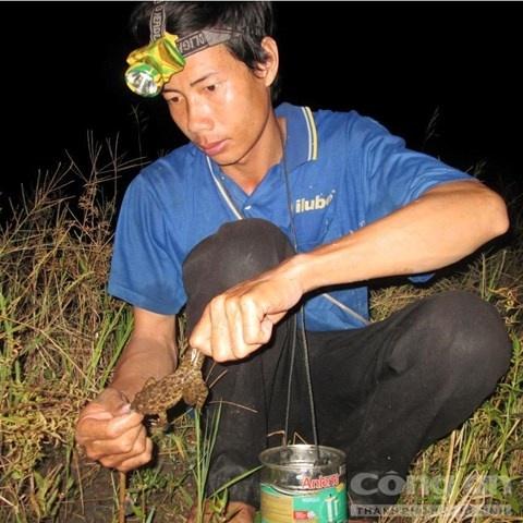 Nghe doc o mien Tay hinh anh 2 Mùa nước nổi là thời điểm cắm câu ếch trở nên sôi động.