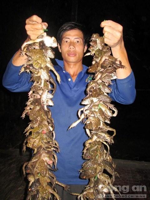 Nghe doc o mien Tay hinh anh 4 Chiến lợi phẩm sau một đêm cắm câu ếch.