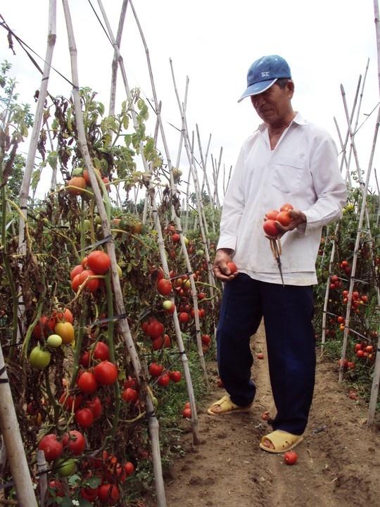 Canh bac cua nha vuon Da Lat hinh anh 2 Không ít lần người nông dân Đà Lạt phải đổ bỏ những loại rau củ do mình làm ra.