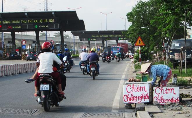Chim cut thai loai doi lot chim rung ban o via he Sai Gon hinh anh 1