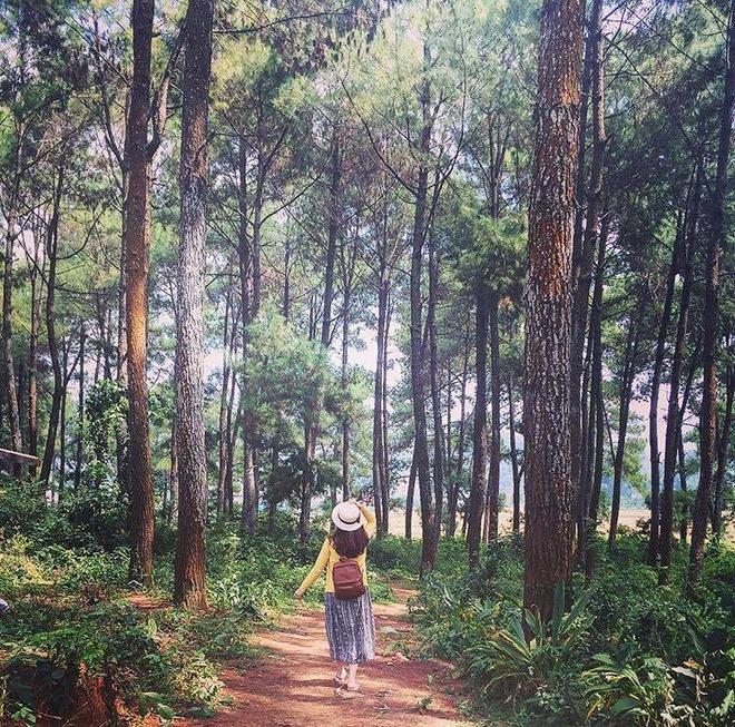 Rừng thông bản Áng - Địa điểm du lịch