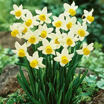 Ngay Tet, khong cho tre nho lai gan hoa thuy tien hinh anh 2