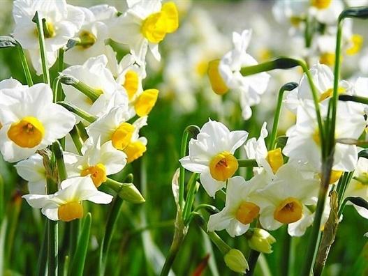 Ngay Tet, khong cho tre nho lai gan hoa thuy tien hinh anh