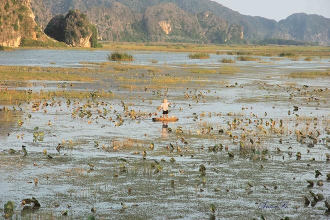 24 gio kham pha dam Van Long - phim truong cua 'Kong: Skull Island' hinh anh 3