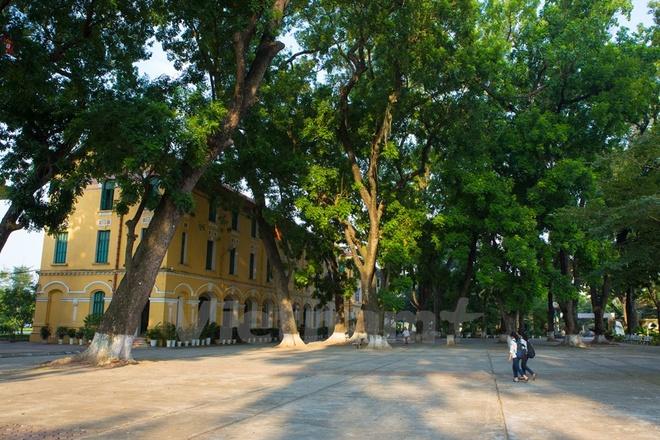 Can canh nhung ngoi truong pho thong tram nam tuoi o Ha Noi hinh anh 3 Những hàng cây xanh rợp bóng cả sân trường.